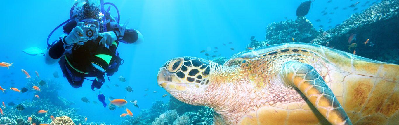Taucher_Turtle