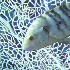Fisch Koralle